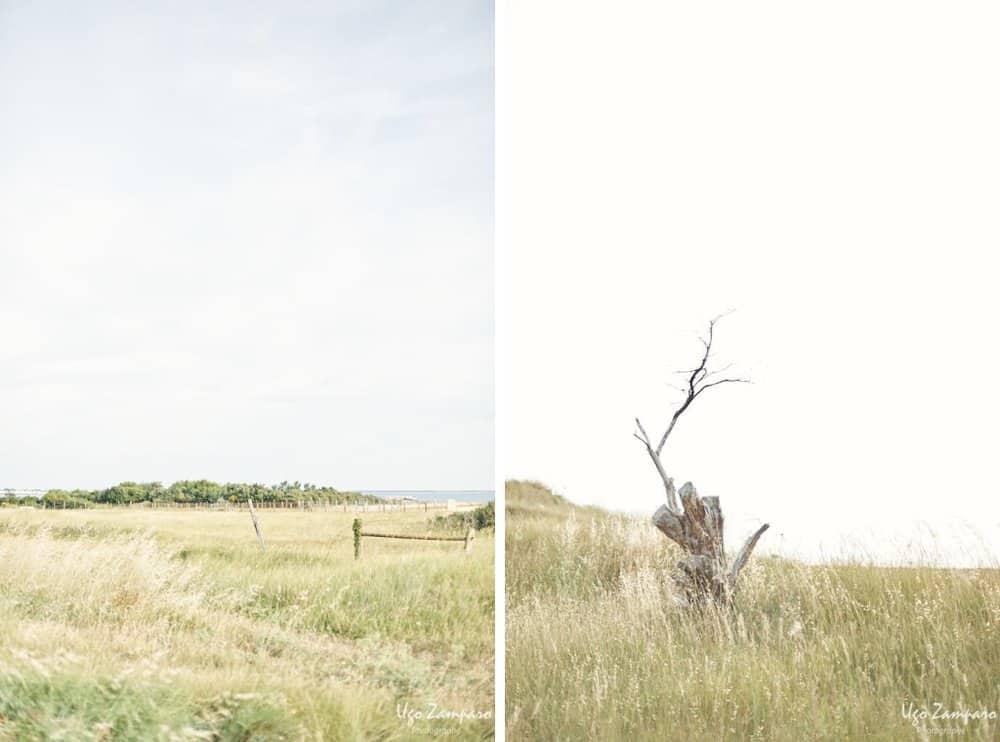 Nature à la pointe du chay - photographe la rochelle ile de ré